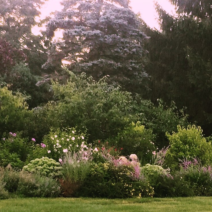 Dawn in the garden after the rain stopped