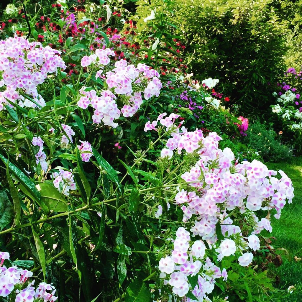 Ah the beauty of Franz Schubert  the phlox garden