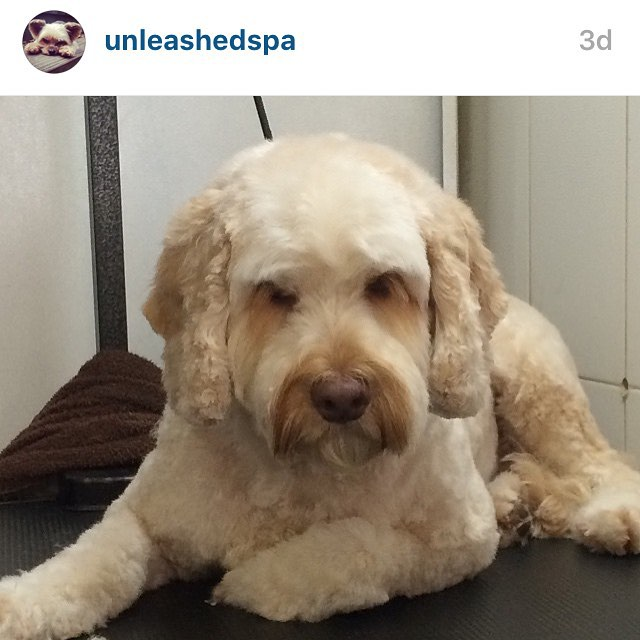 Regram from unleashedspaour sweet dog Max feeling sleepy at thehellip