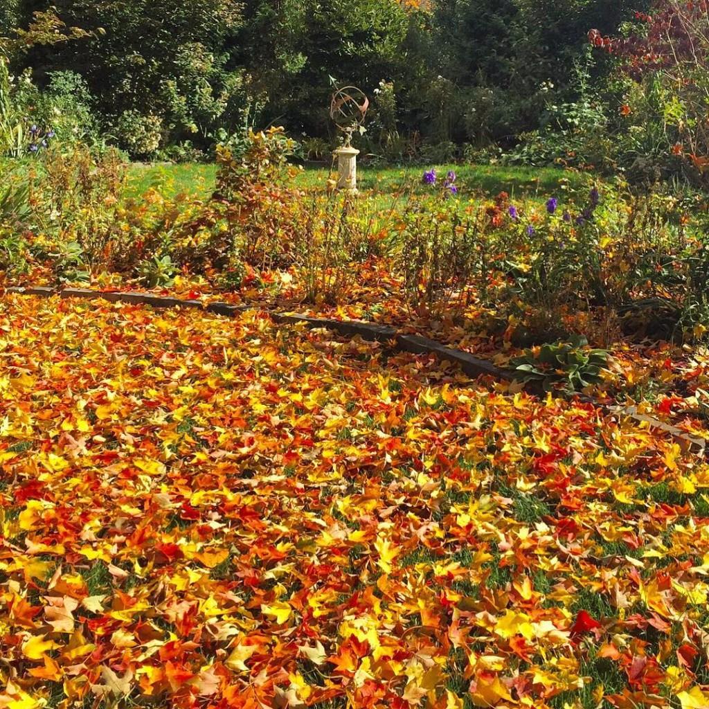 A last hurrah in the garden leaveschanging