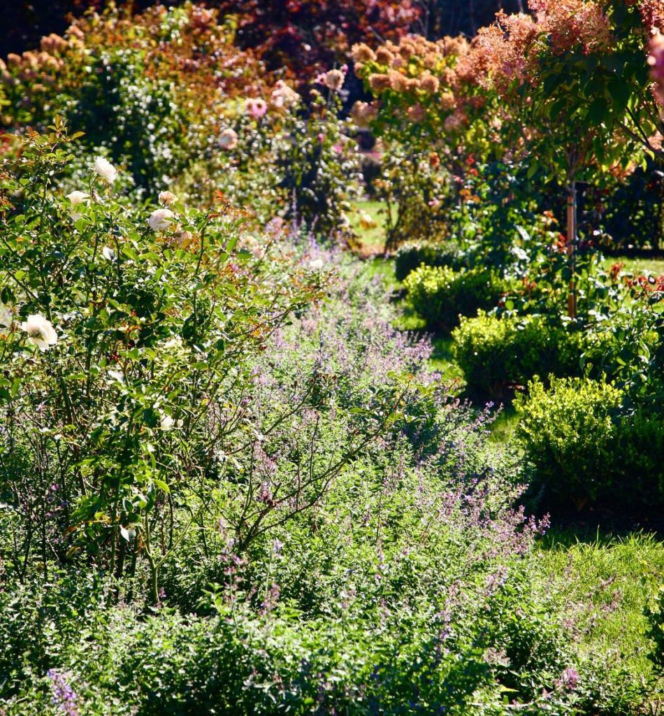 Fascinating how the autumn light in the garden creates ahellip