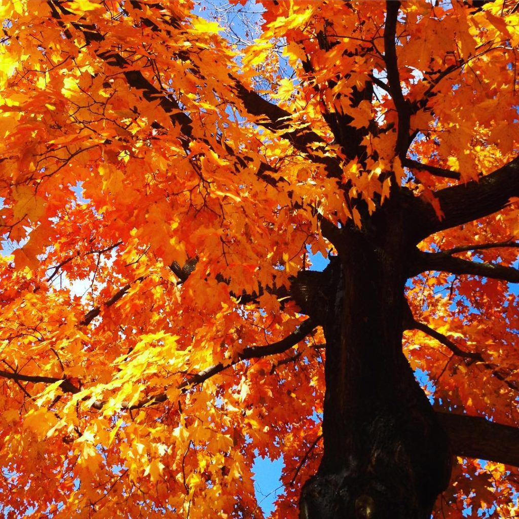 Standing beneath the maple tree in the Perennial Garden leaveshellip