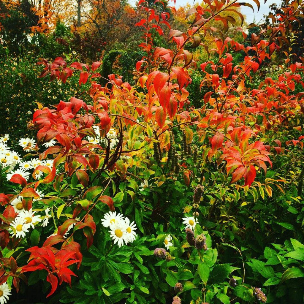 Loving the contrasts gardenlovers autumn flowerstyle hudsonvalley leaves