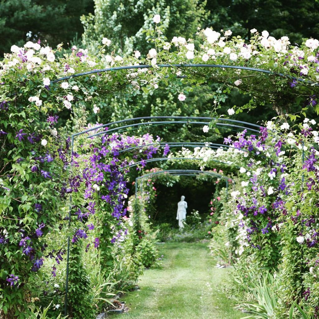 The rose arbor walk is filling out rosearbor gardens gardendesign