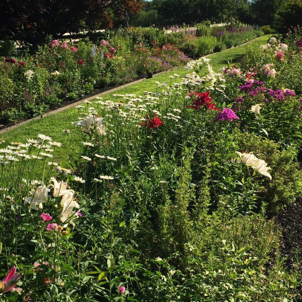 The perfume walk gardendesign gardengram perennialgarden flowerbed lilies countrylife allee