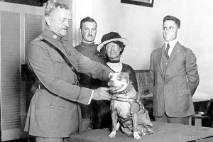 Gen. John Pershing awards Sgt. Stubby with a gold medal in 1921. Stubby served in 17 battles and fought in four major allied offensives during WWI. PHOTO: SMITHSONIAN INSTITUTION'S NATIONAL MUSEUM OF AMERICAN HISTORY