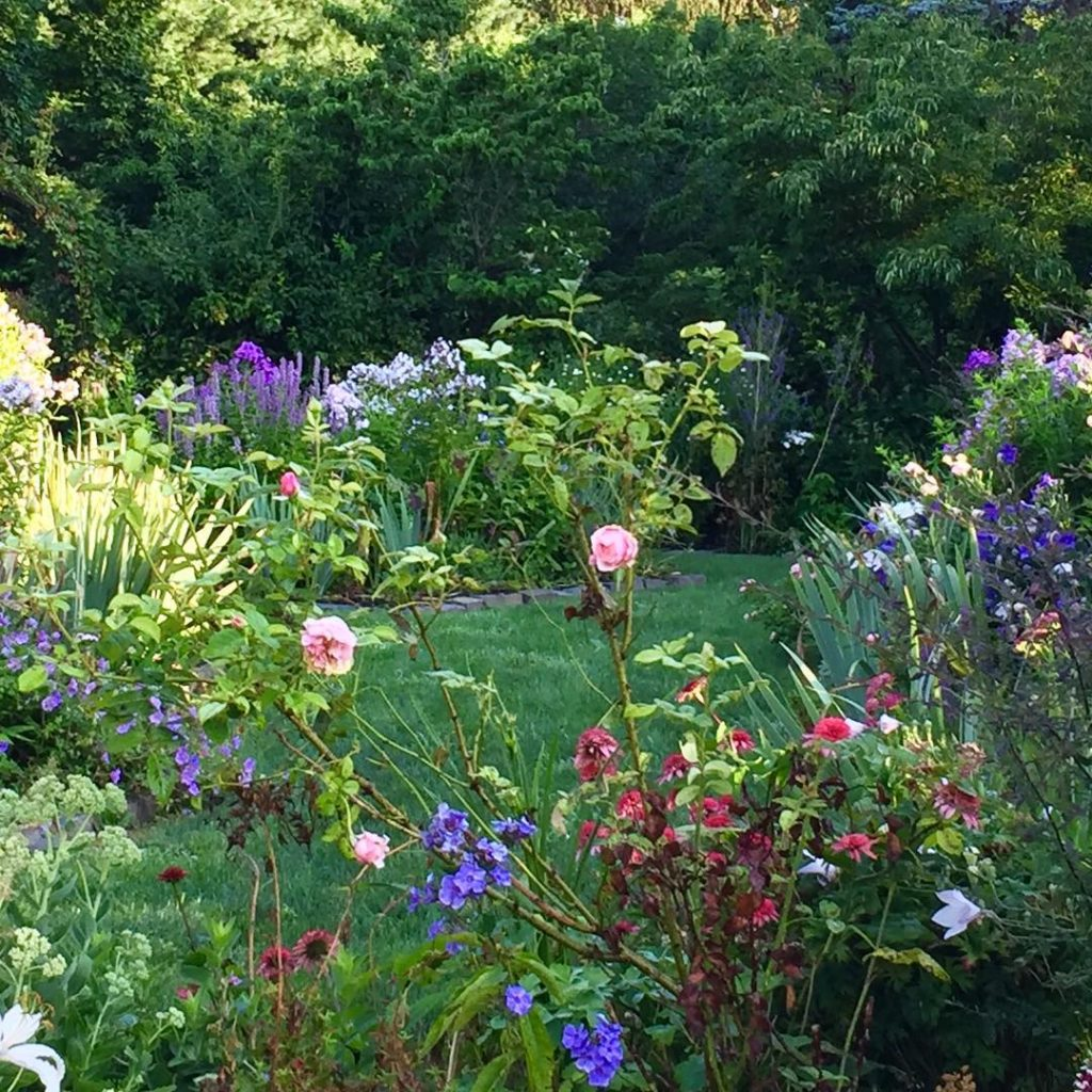 Morning light on the Perennial Garden gardendesign perennialgarden flowerbed gardenloverhellip
