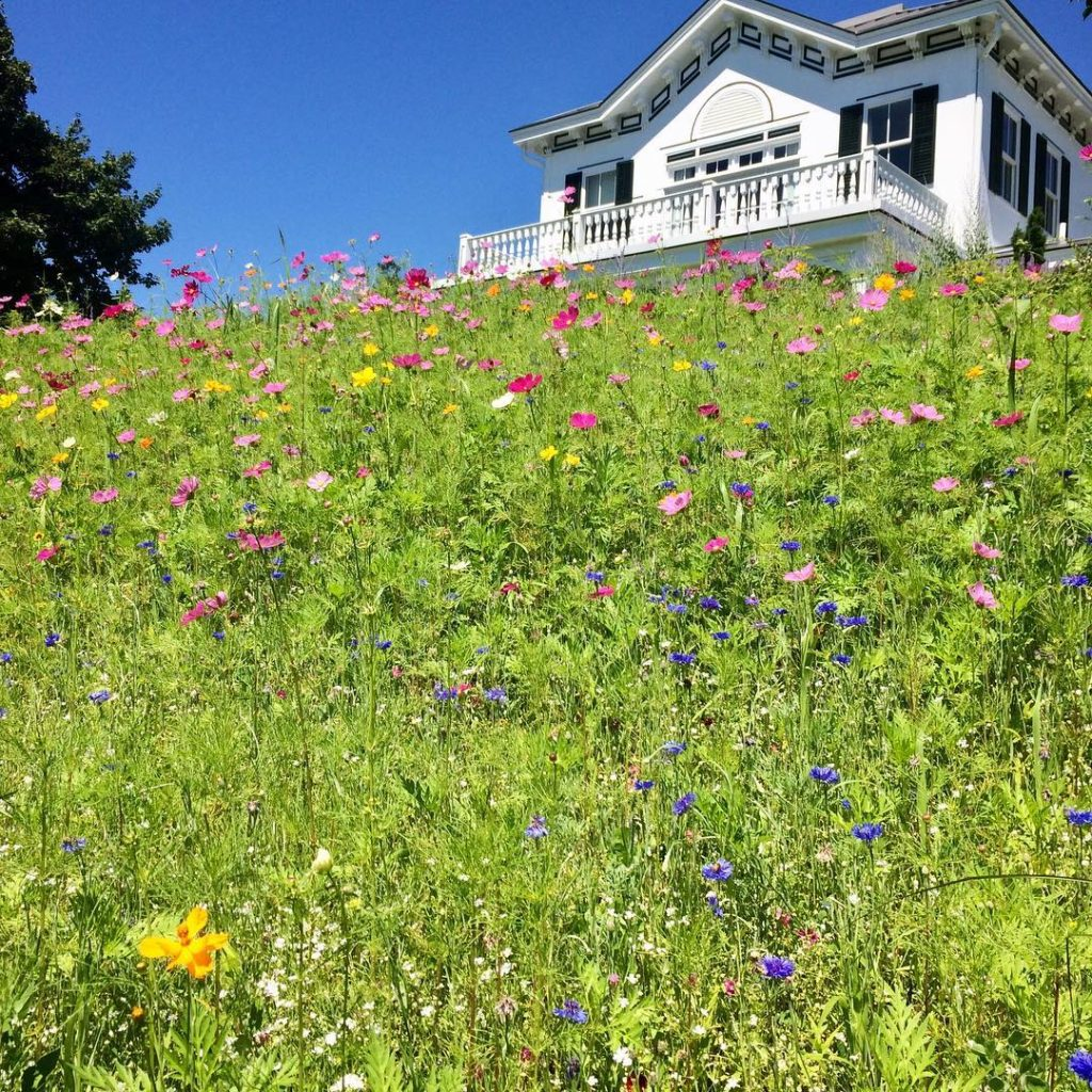 The wild flower bank has come into its own gardeninspirationhellip